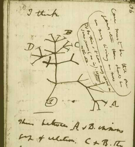 Charles Darwin's Literary Inspirations