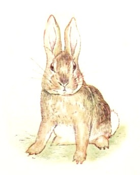 Fierce_Bad_Rabbit_beatrix_potter