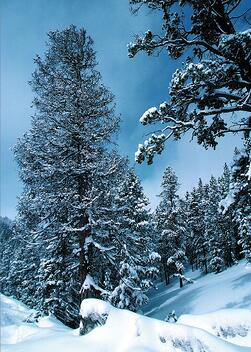snow-trees-books-tell-you-why-1.jpeg